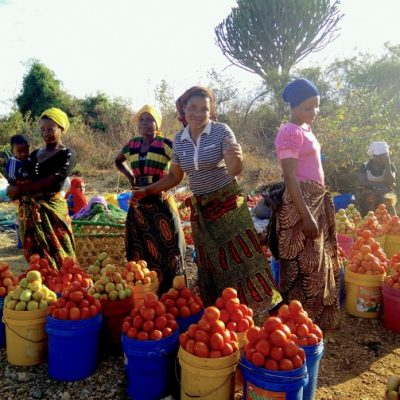 Selling Tomatoes by the Highway
