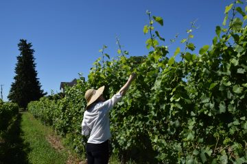 Student in vineyard