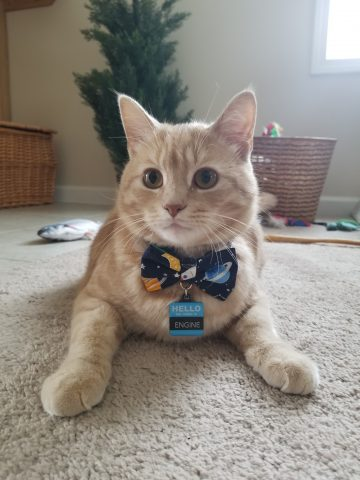 Cat in a space themed collar