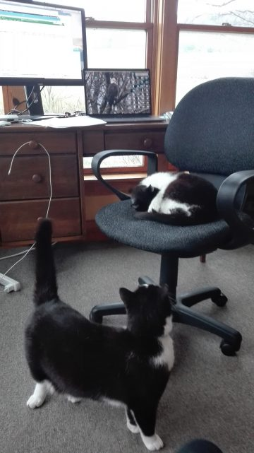 Cats around an office chair