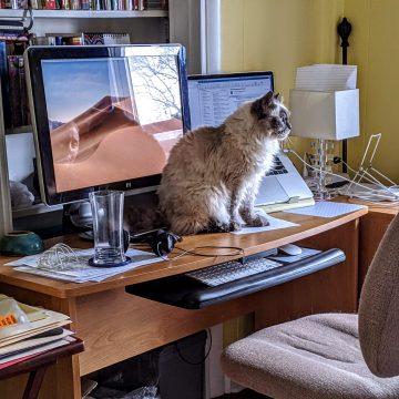 Whiskey the cat on a desk
