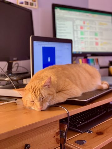 Heisenberg the cat laying on a laptop keyboard