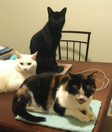 Iris, Umbra, and Charlotte the cats