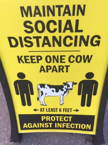 """Poster with a cow standing between two people with the text """"Maintain social distancing: Keep one cow apart. Protect against infection."""""""