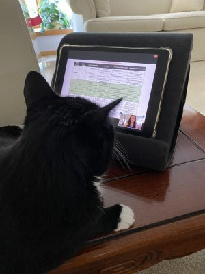 Elena Michel's family cat watches her defense presentation on Zoom.